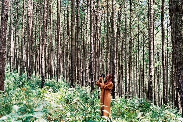 Rừng cây Dương Xỉ xuất hiện trong nhiều MV