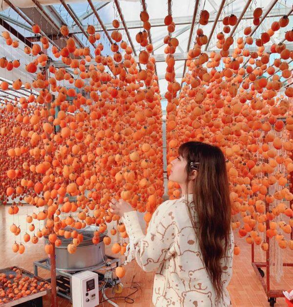 Hồng Đà Lạt - Thức quả thơm thảo của phố núi - Ảnh 2