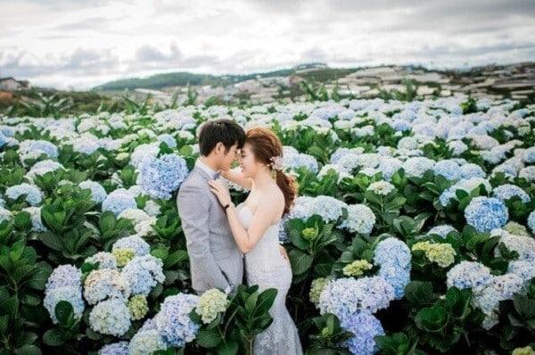 Đồng Hoa Cẩm Tú Cầu - Địa điểm chụp ảnh cưới đẹp tại Đà Lạt