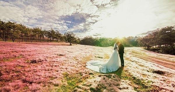 Đồng Cỏ Hồng - Địa điểm chụp ảnh cưới đẹp tại Đà Lạt