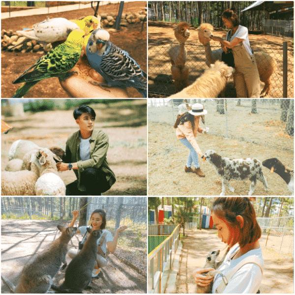 Vườn sở thú Zoodoo