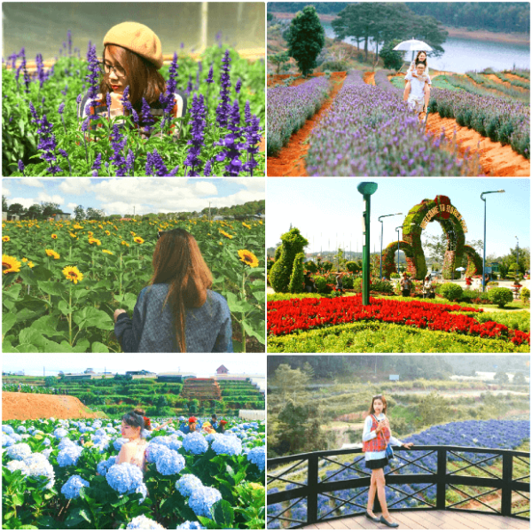 It is impossible not to visit the flower gardens when traveling to Da Lat