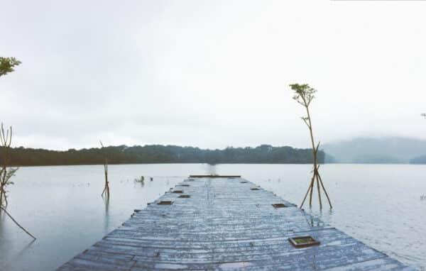 Cầu gỗ Lavender
