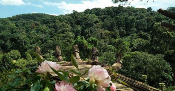 Bàn tay Phật