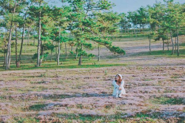 Vùng ngoại ô yên bình với ngọn cỏ Hồng