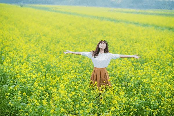 Cánh đồng hoa cải vàng