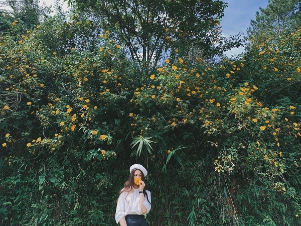 Chụp ảnh sống ảo cùng hoa dã quỳ