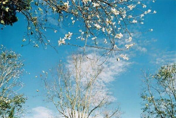 Cánh hoa rơi càng làm không gian thêm lãng mạn