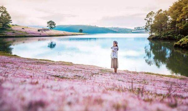 Đồi cỏ Hồng, khung trời mộng mơ của thanh xuân
