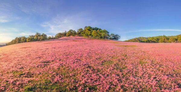 Từng ngọn cỏ như điểm tô sự sinh động cho không gian khi gió lay động