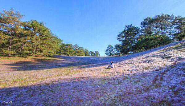 Cánh đồng cỏ Hồng biến chuyển theo thời gian khi về chiều