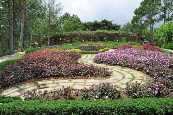 Khu vườn hoa tại đồi Mộng Mơ