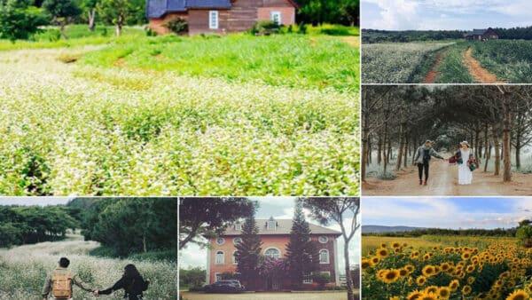 Những vùng trời nắng vàng ươm chiếu rọi xuống cánh đồng hoa vào tháng 4 của Đà lạt