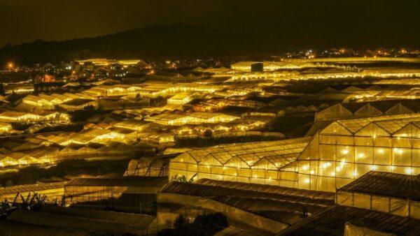Làng hoa Thái Phiên, kinh đô ánh sáng về đêm