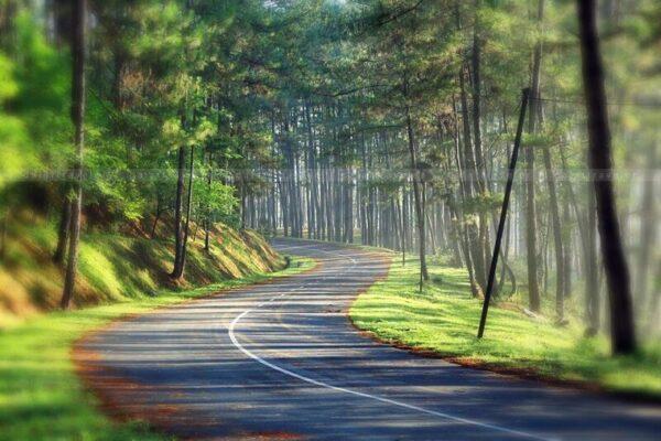 Ánh nắng rải đều trên khắp những con đường Đà Lạt