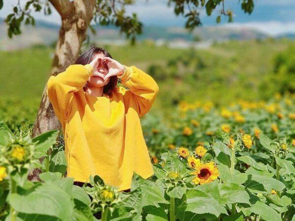Sự lãng mạn đầy trữ tình của hoa Hướng Dương