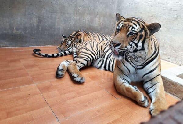 Vườn thú hoang dã ở thác Prenn