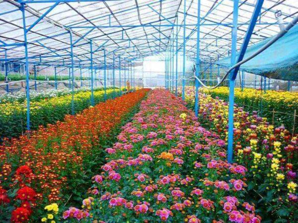 Đắm chìm trong không gian được bao phủ bởi hoa đa sắc