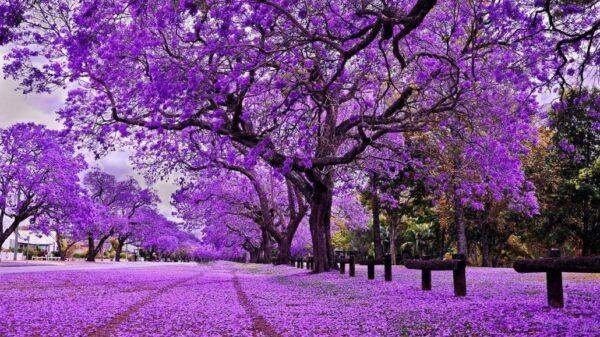 Tháng 2 Đà Lạt với vẻ đẹp mộng mơ đáng kinh ngạc