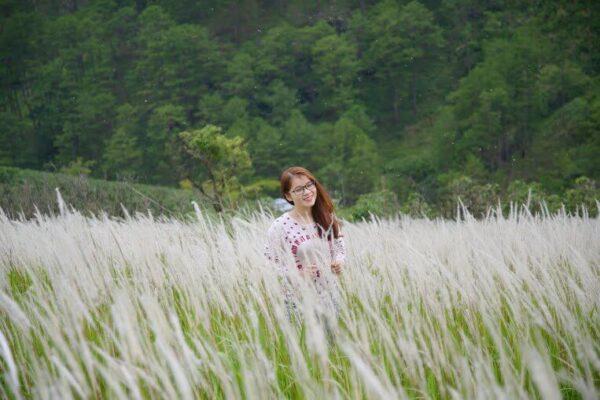 Cánh đồng cỏ lau Đà Lạt đẹp ngất ngây