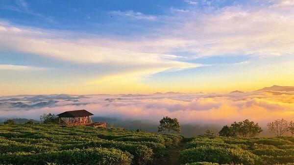 Săn mây ở đồi chè Cầu Đất Đà Lạt
