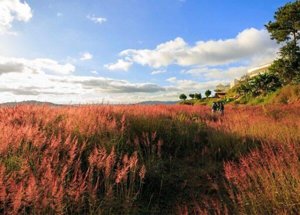 Săn mây đồi cỏ hồng Đà Lạt