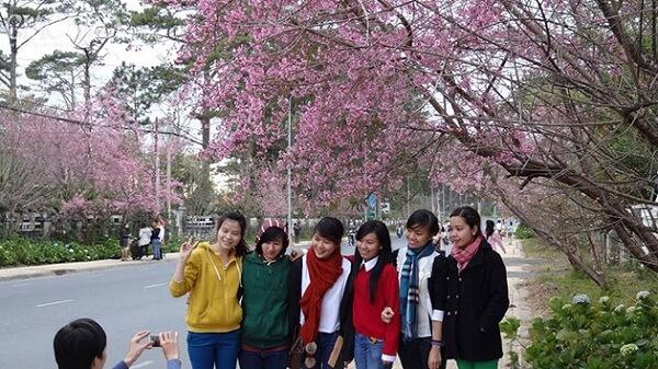 Thưởng thức trọn vẹn mùa hoa Mai Anh Đào