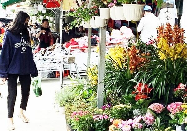 Hoa nở sớm được bày bán với giá rẻ trên đường Nguyễn Thị Minh Khai.