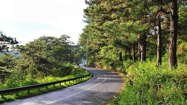 Cung đường dẫn đến đồi chè Cầu Đất Farm