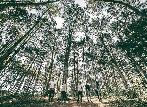 Rừng thông Đà Lạt đẹp hoang sơ 'sống ảo' cực chất