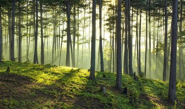 Rừng thông đối diện hồ Than Thở