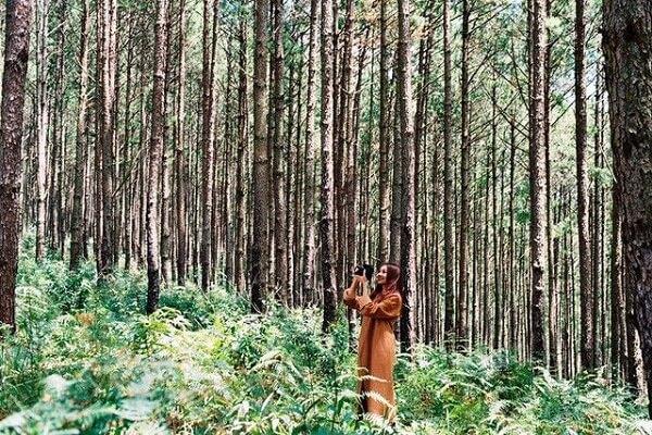 Rừng thông hồ Tuyền Lâm
