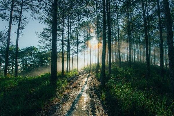 Rừng thông đồi chè Cầu Đất