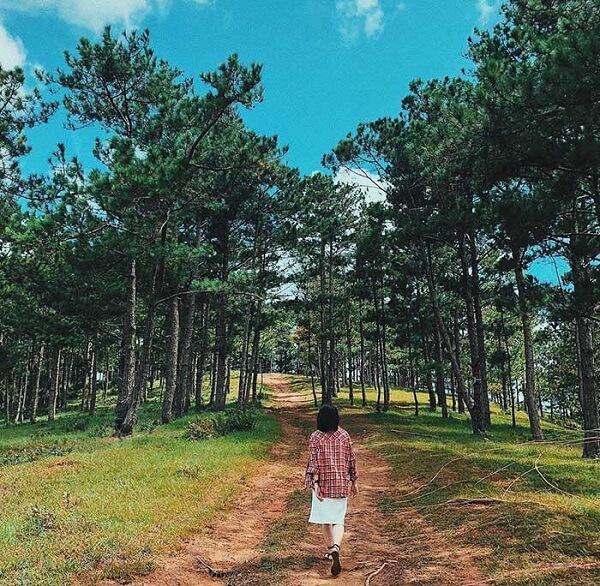 Check in rừng Thông Đà Lạt ở đâu đẹp?
