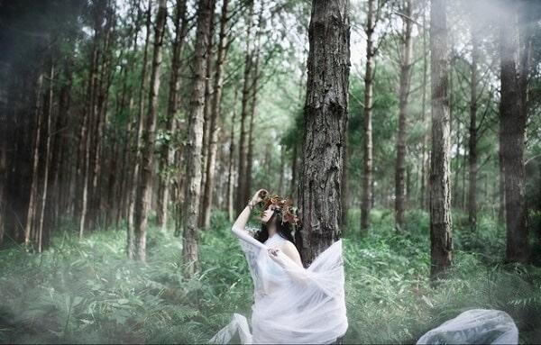 Chụp hình ở rừng thông Đà Lạt lúc nào đẹp nhất?