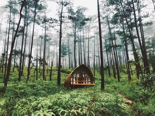 Rừng thông: Địa điểm chụp ảnh cưới lý tưởng khi đến Đà Lạt