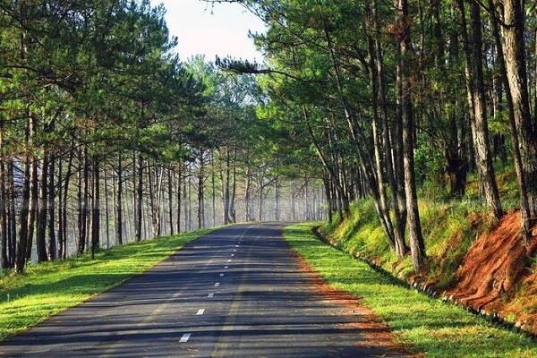 Những rừng Thông Đà Lạt đẹp nhất hiện nay
