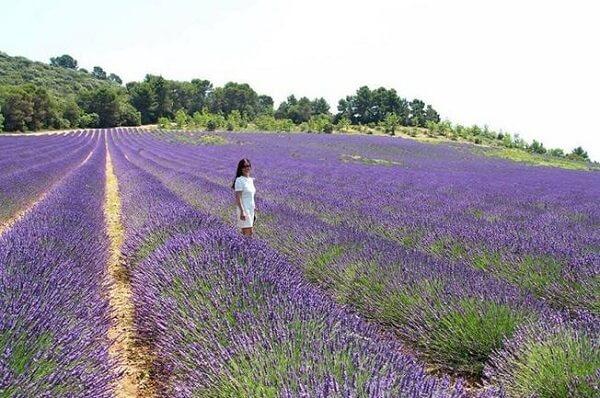 Tham quan vườn hoa Lavender Đà Lạt