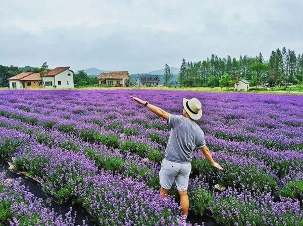 Kinh nghiệm và lưu ý khi đi vườn hoa Lavender Đà Lạt