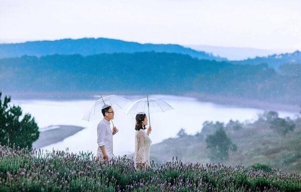 Vườn hoa Lavender hồ Tuyền Lâm Đà Lạt - Ảnh 1