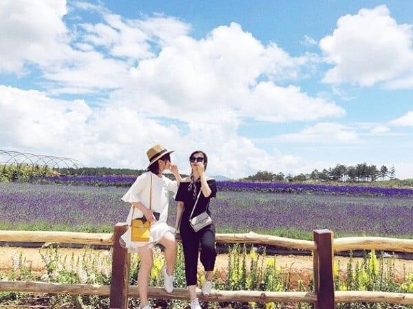 Cánh đồng hoa Lavender Đà Lạt tựa như Pháp