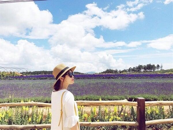 Hình ảnh cánh đồng hoa Lavender Đà Lạt