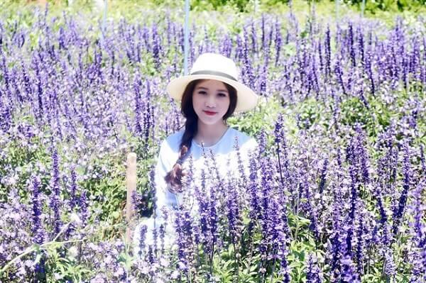 Tour cánh đồng hoa Lavender Đà Lạt