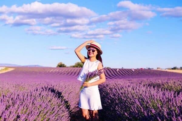 Hoa lavender Đà Lạt nở vào tháng mấy?