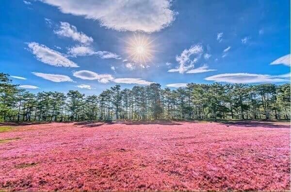 Buổi chiều hoặc sáng sớm là thời gian đẹp nhất để ngắm đồi cỏ Hồng