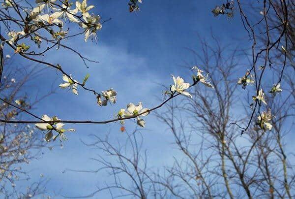 Những cánh hoa mỏng manh mang trên mình vẻ đẹp đến tinh khôi