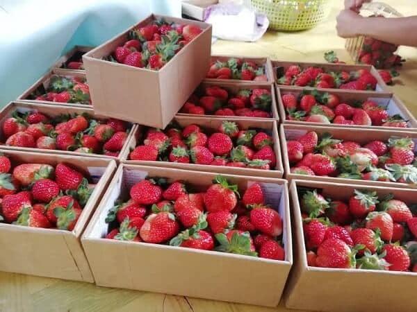 Giá cho mỗi hộp dâu từ 100-120k/hộp, được gói lại bằng hộp nhựa hoặc giấy khá dễ thương.