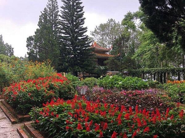 Vườn hoa với những giống hoa quý ở thiền viện