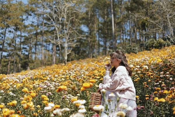 Đồi hoa bất tử Đà Lạt - Ảnh 4
